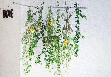 מובייל צמחים